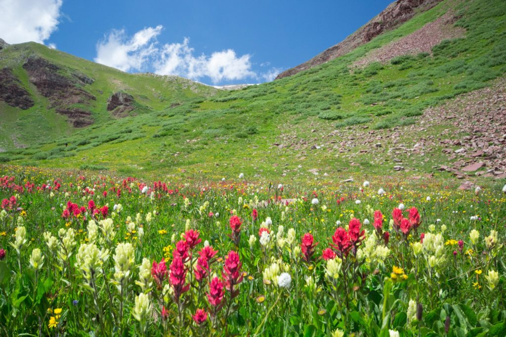 Aspen Snowmass Guided Hiking Adventures: Colorado Wildflowers